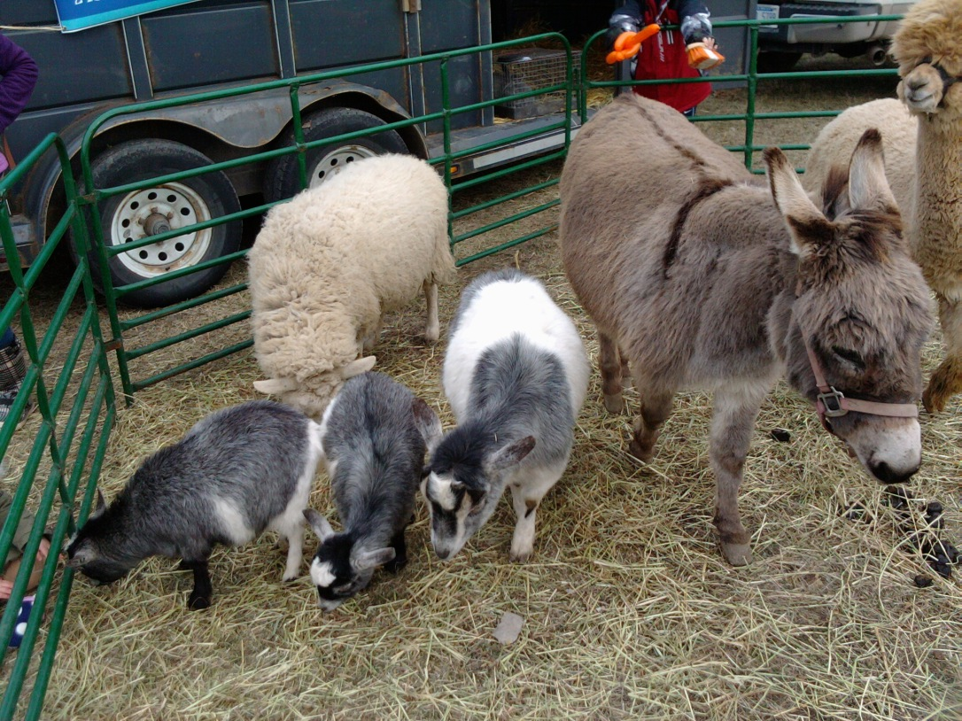 Every festival HAS to have a petting zoo!
