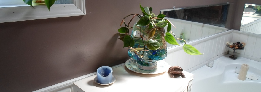 Betta Fish In A Large Vase Roundabout Forty