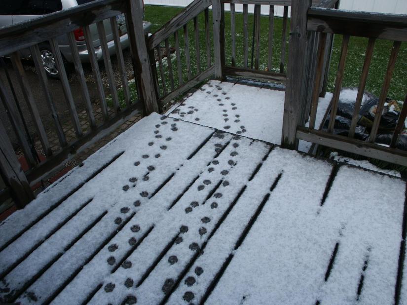 Snow May 15, 2016