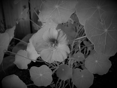 flower orange (2)